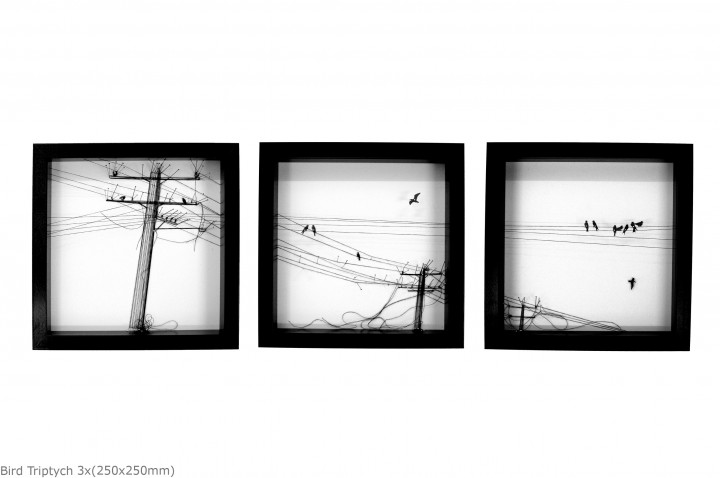 bird triptych 3x(250x250mm)